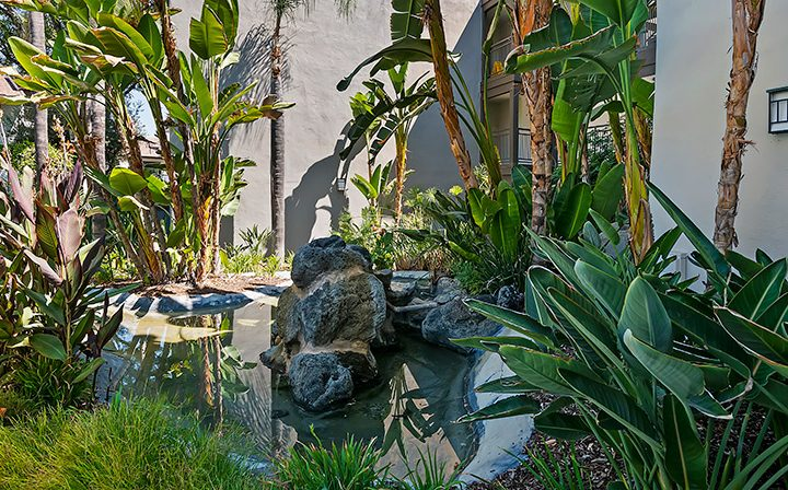 Pond and foliage at Alura, a Woodland Hills apartments community
