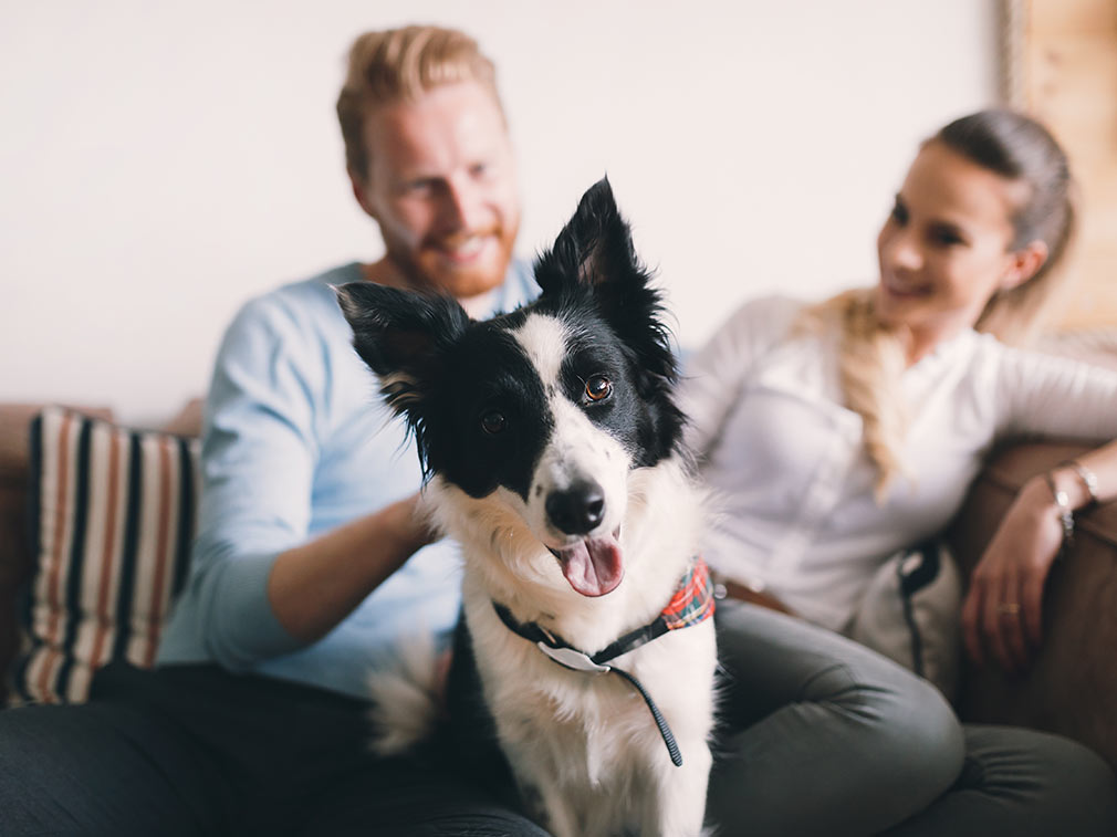 A couple with their dog