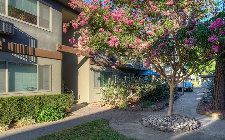 Unit exteriors and blooming tree at Highland Gardens, a Mountain View apartments community