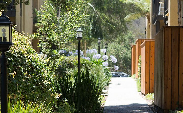 Cement pathway between units and verdant growth at Los Robles, apartments in Thousand Oaks