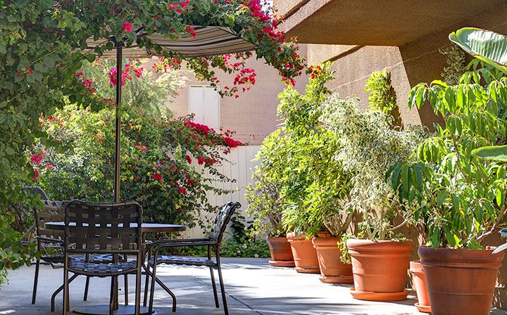 Shaded seating area next to blossoming growth at Marlon Manor, Hollywood apartments in Los Angeles