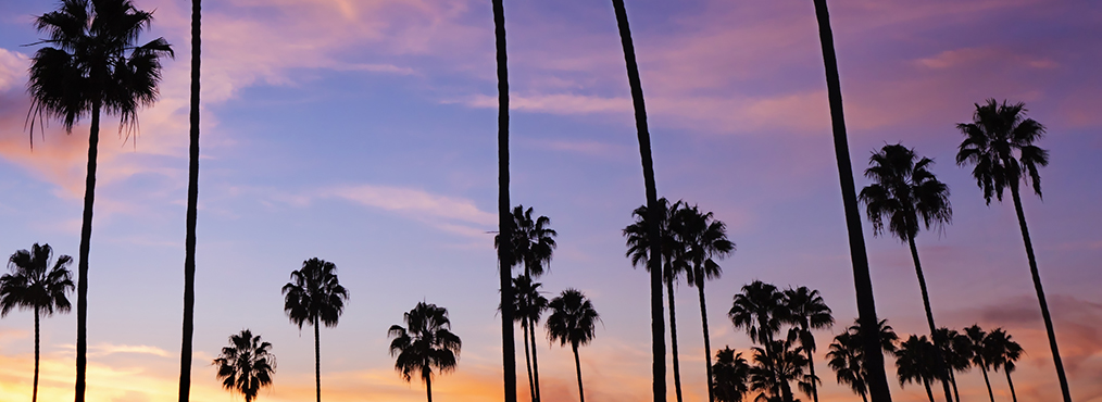 Palm trees against a colorful sky at sunset, near Decron's West Los Angeles apartments